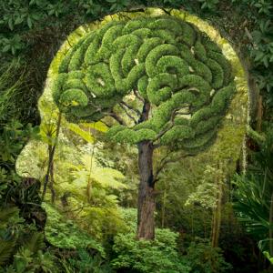 Neuro Arboriculture igor morski