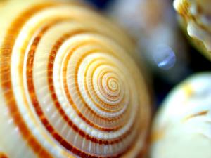Sea-Shell-Spiral-WaLp-tw2011