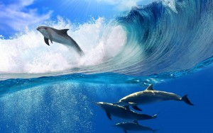 lovely_dolphins