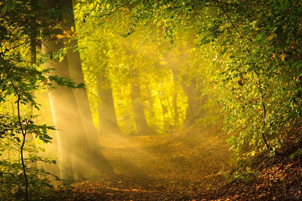 Morning Sun Rays - Harald Hoyer