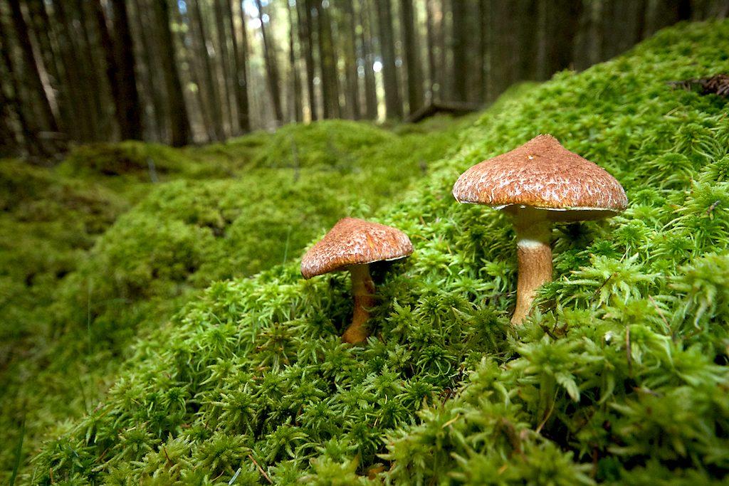 mushroom-forest-floor